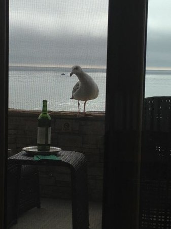 Moonstone Landing: A gull looking for snacks on our patio.