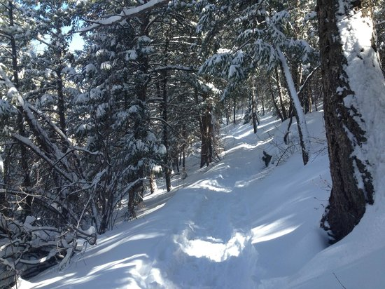 Snowmass Mountain Chalet: Trail!