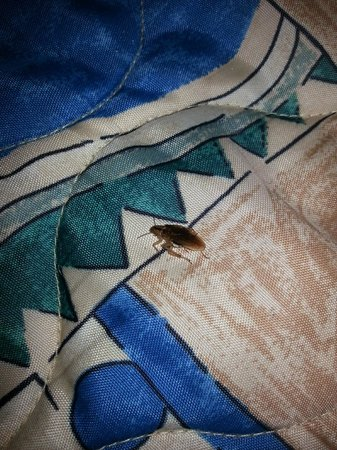 Piedmont, SC: on my bed