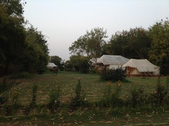 Jungle View Resort: view of the tents