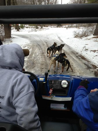 Skytop Lodge: Dry Land Dogsledding