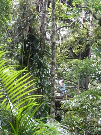 Cow Bay, Australia: Daintree forest in the Discovery Centre