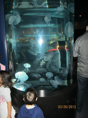 Tennessee Aquarium Coupons 2015 Best Auto Reviews