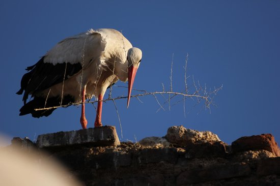 Riad Carina: Stork on the roof