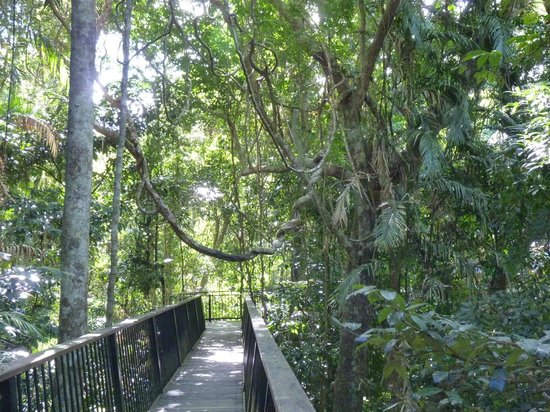 Cairns District, Australien: Canopy walk