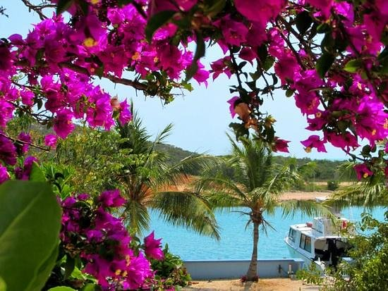 Harbour Club Villas & Marina: Flowering bouganvillea on the way down to the Marina docks.