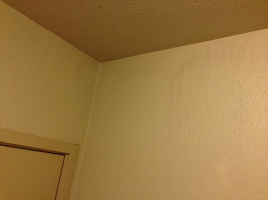 Days Inn Las Vegas At Wild Wild West Gambling Hall: Moldy walls