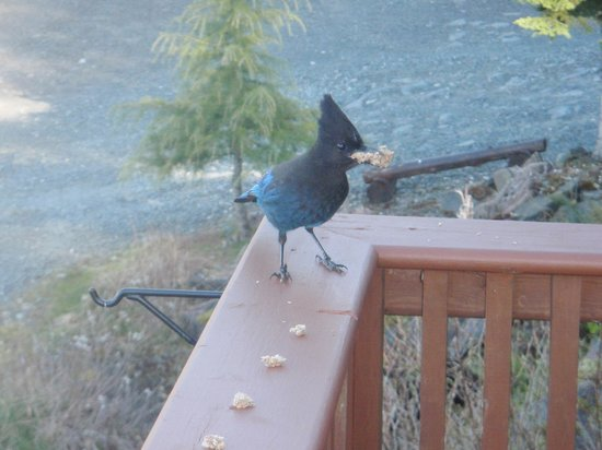 Bear Cove Cottages: Stellar Jay