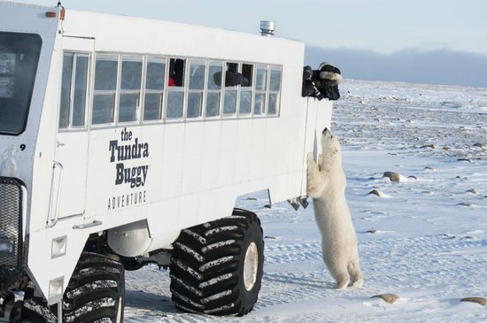 The Tundra Buggy Adventure - Day Tours