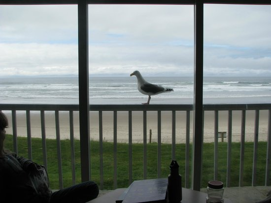 Surfside Resort: A visitor to our patio