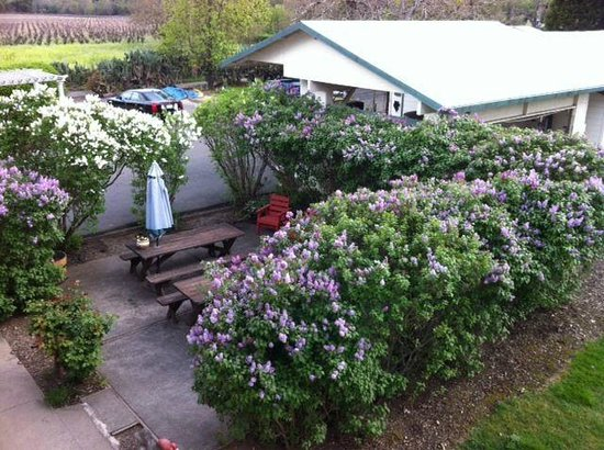 Irish Rose Inn: Michaels room looks over the back yard and valley - Lilac patio in late march