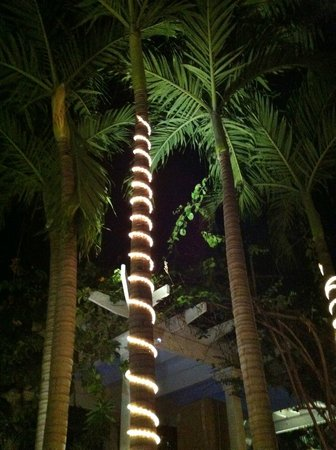 Almond Tree Inn: light wrapped trees