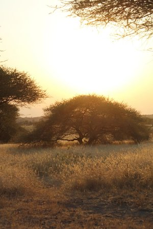 Manyara Ranch Conservancy: Sunset from the gathering spot around the fire.