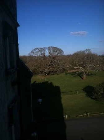 Ballyseede Castle: Old oaks view from Coghill room