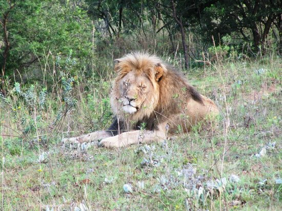 Badplaas, Sør-Afrika: King of the Nkomati Game Reserve