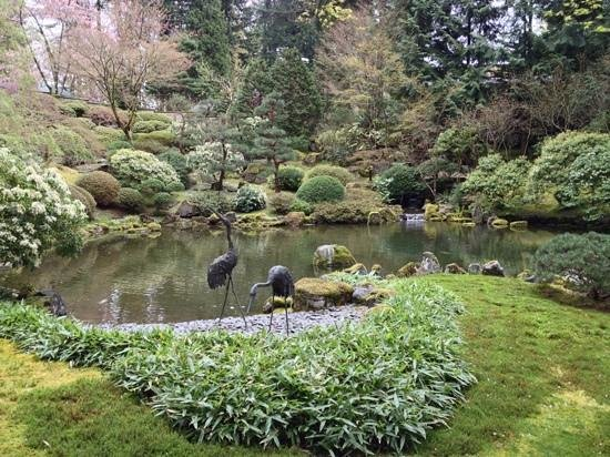 Portland japanese gardens koi pond picture of portland for Portland japanese garden koi