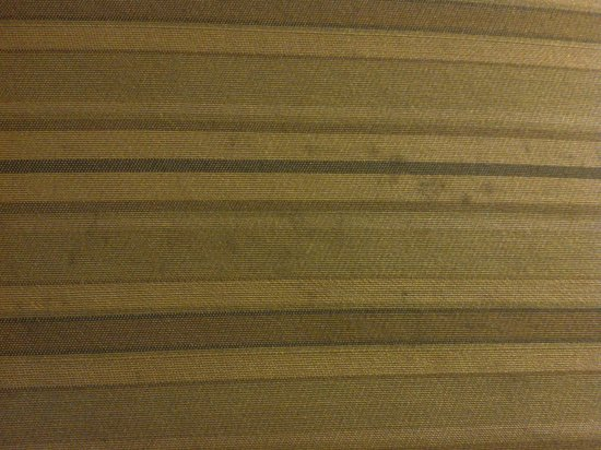 Comfort Suites Bluffton: Mold on sofa