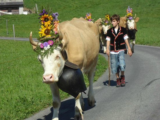 Schonried, Suiza: Simmentaler Khe - &quot;Zglete&quot;