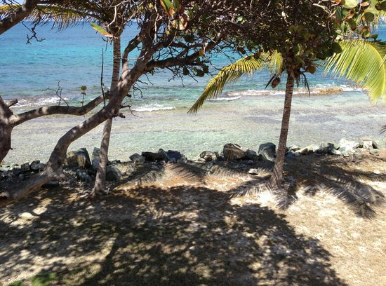 Tamarind Reef Resort : Beach/reef 