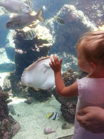 Maui Ocean Center: Kids had a great time