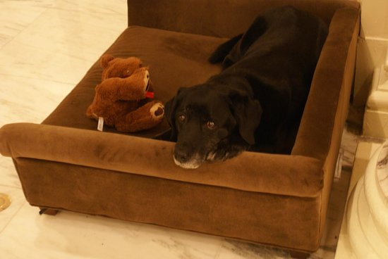 The Fairmont Copley Plaza, Boston: Katie - der Hotelhund