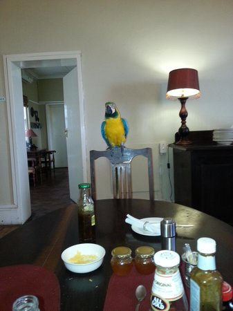 Lemoenfontein Game Lodge: Kiki the parrot