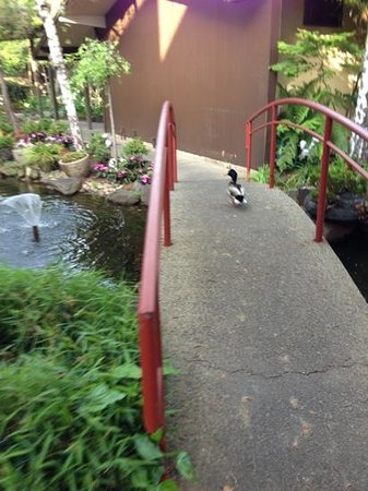 Dinah&#39;s Garden Hotel: ducks in the garden