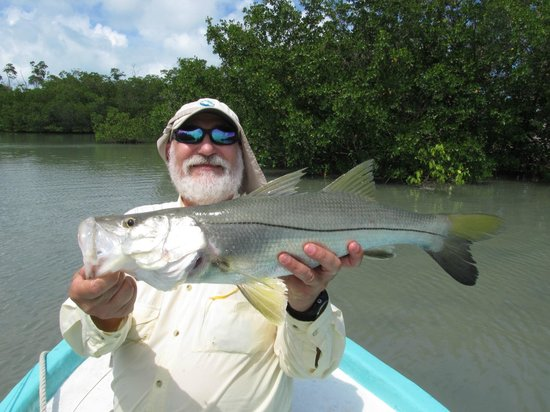 Ladyville, เบลีซ: Snook, caught with Puglisi Everglades fly