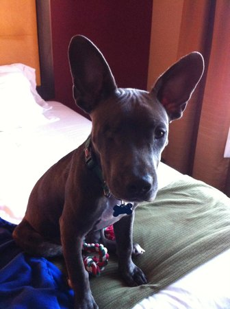 Holiday Inn Express Kanab : Sweet little one-eyed puppy that stayed overnight