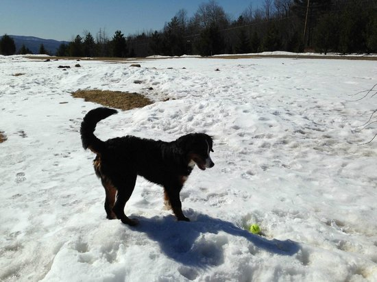 Montgomery Center, VT: our puppy had a great time playing in the yard and the trails