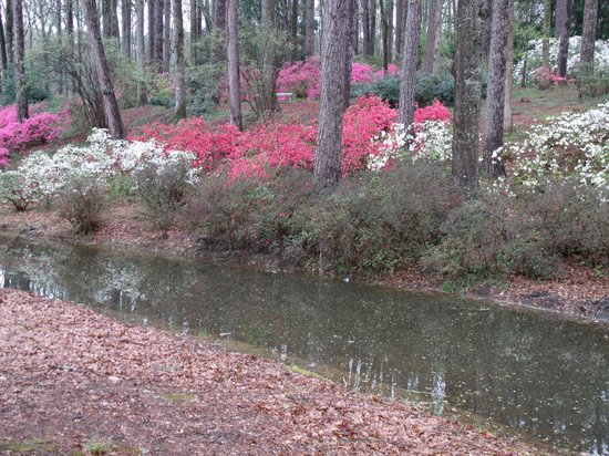 Callaway Gardens Resort: Gardens near the lake