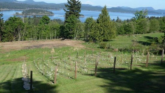 B&B at Salt Spring Apple Company: Look out over our growing orchard