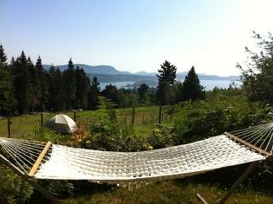 B&B at Salt Spring Apple Company: Rest, relax, read or chat in our hammock