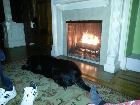 Foley House Inn: Archie enjoying the fire