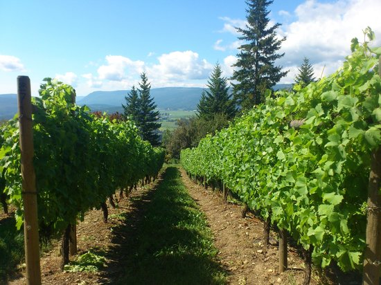 Things To Do Near Salmon Arm Bc