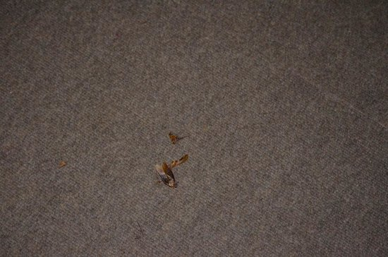 Malelane, South Africa: house infested with roaches