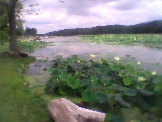, : Narrow part of Cowan Lake with Water Lillies