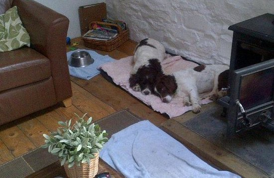 Brechfa, UK: Pooped out 'Fire Dogs'!!