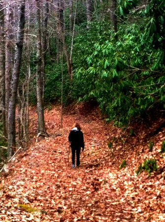 Mountain Rose Inn: A walk in the Woods