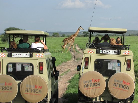 Tarangire River Camp: 'Africa Tried and Tested' safari in Tarangire