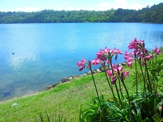 Yungaburra, : Beautiful Flowers around the Lake