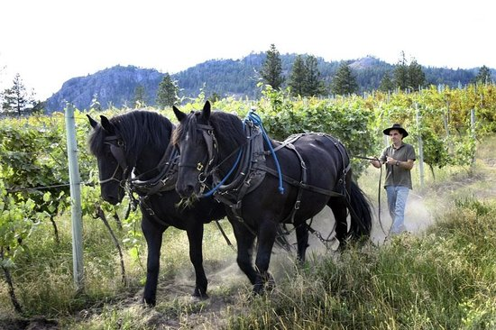 Working Horse Winery