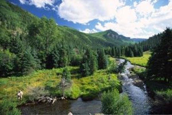 Creede, CO: Fly-fishing the upper Goose Creek in the Weminuche Wilderness.