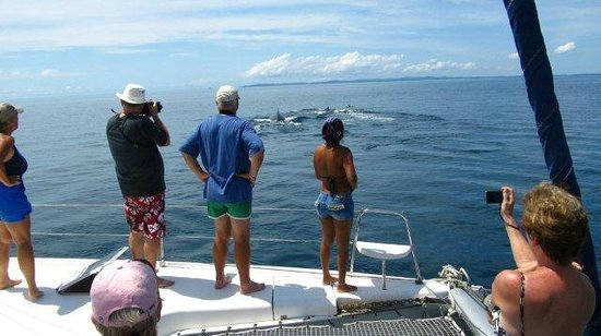 Whale Watching Panama - Day Tours: Whale watching from the catamaran sailboat in the Pearl islands