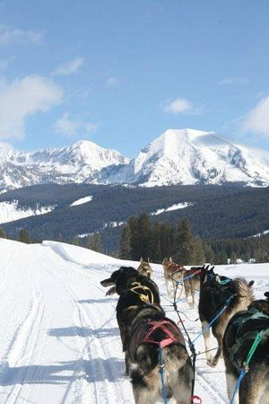 Lubang Jackson, WY: Dog Sledding in Wyoming......