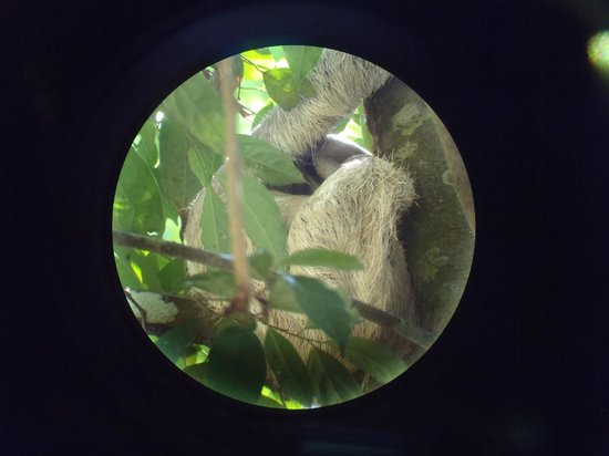 Byblos Resort &amp; Casino: Sloth in Manuel Antonio Park