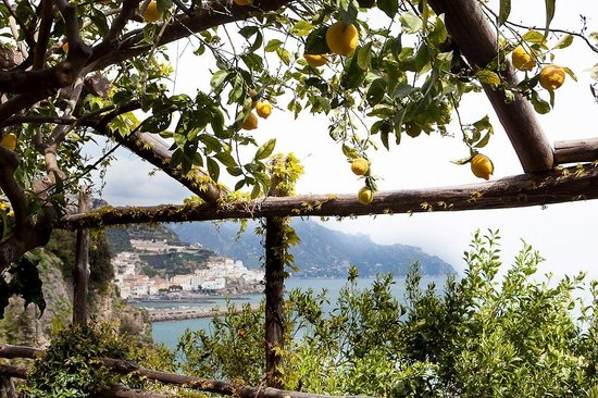 Santa Caterina Hotel: Lemon groves