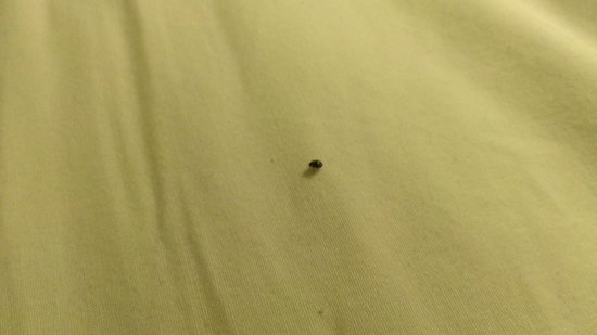 Travelodge Virginia Beach: One of the bugs we found in our bed