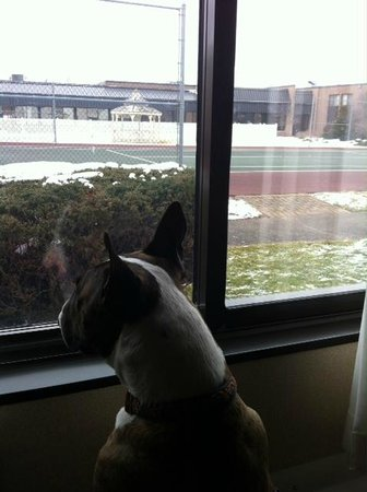 Holiday Inn Waterloo-Seneca Falls: My dog loves the view!