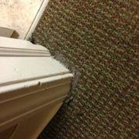 CrestHill Suites Albany: Caulking put down where the carpet is pulling up